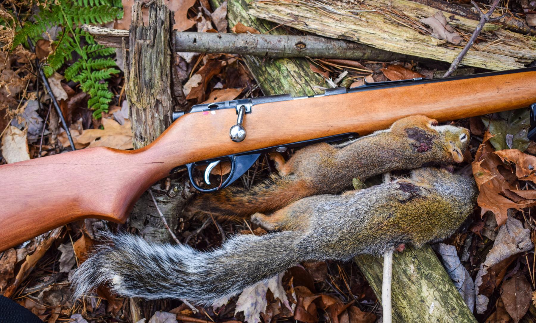 Varmint Laying Next to Rifle
